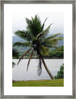 Hawaiian Palm Framed Print by Athena Mckinzie