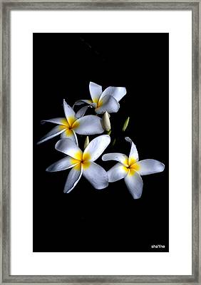 Hawaiian Smell   Framed Print