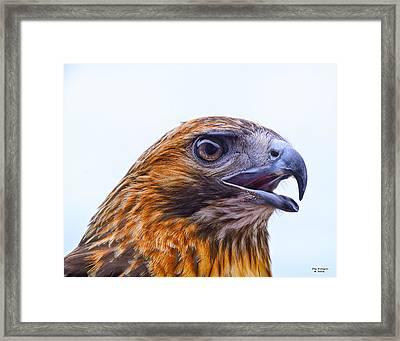 Hawk Head Framed Print by Peg Runyan