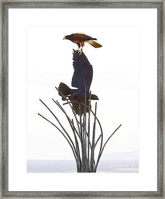 Framed Print featuring the photograph Hawk On Statue by Rebecca Margraf