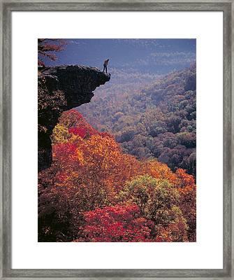 Hawks Beak Framed Print by Garry McMichael