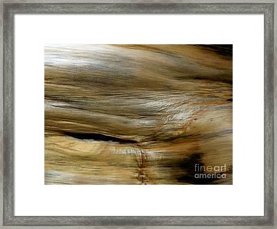 Hawk's Eye Framed Print by Michael Wyatt