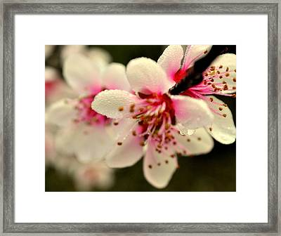 Hawthorn  Framed Print by Marty Koch