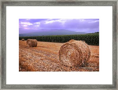 Hay Bales At Sunrise Framed Print by HD Connelly
