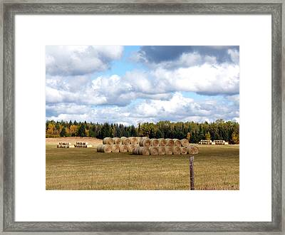 Hay Bales Framed Print by Will Borden