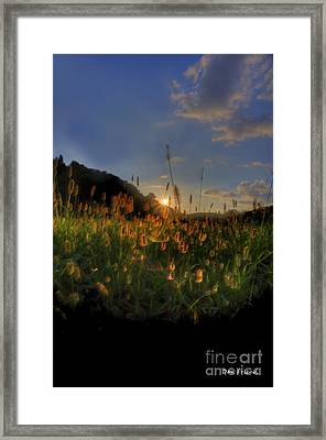 Hay Field Framed Print by Dan Friend