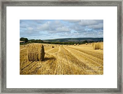 Hay Field Framed Print by Donald Davis