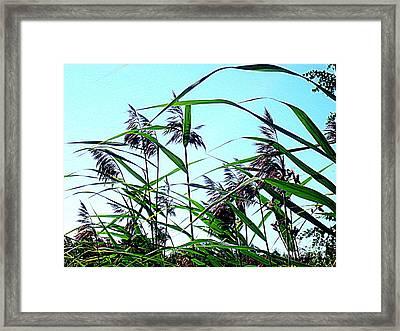 Hay In The Summer Framed Print by Pauli Hyvonen