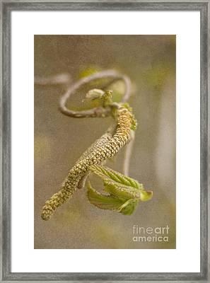 Hazel Branch Framed Print by Christine Amstutz
