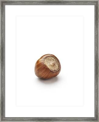 Hazelnut Framed Print by Jon Stokes