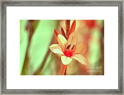 hd 394 hdr - Champagne Framed Print by Chris Berry