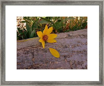 He Loves Me He Loves Me Not Framed Print by Ali Dover