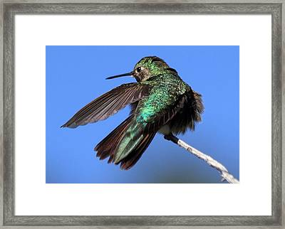 He Went That Way Framed Print
