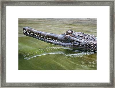 In The Swamp Framed Print by Dan Holm