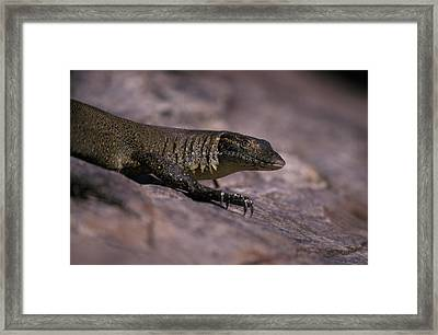Head And Front Leg Claw Detail Framed Print by Jason Edwards
