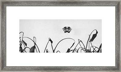 Head-on Gator Framed Print by Jim Wright