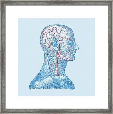 Head Veins Framed Print by Mehau Kulyk