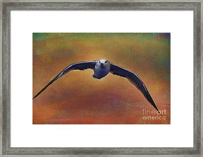 Heading Home Framed Print by Deborah Benoit