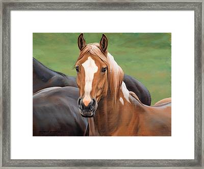 Head's Up Framed Print