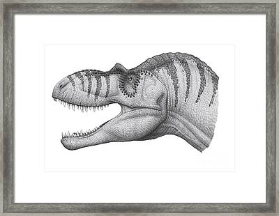Headshot Of An Albertosaurus Framed Print