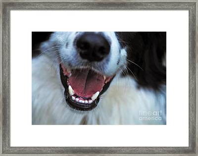 Healthy Canines Framed Print by Kaye Menner