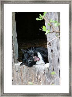 Hear Me Roar Framed Print