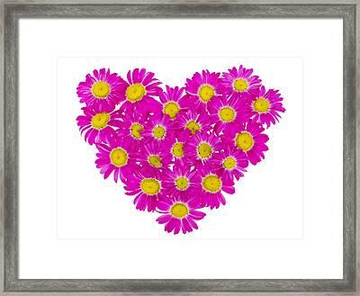 Heart From  Pink Daisies Framed Print by Aleksandr Volkov