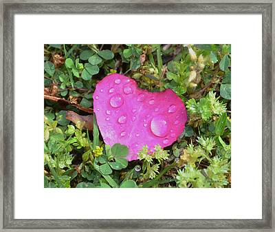 Heart Of A Rose 003 Framed Print