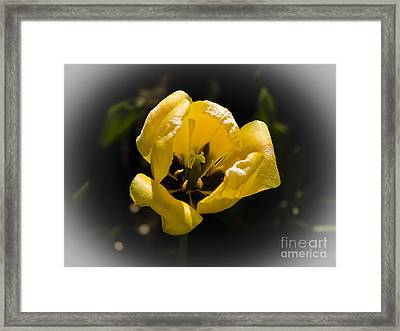 Heart Of Gold  Coeur En Or Framed Print by Nicole  Cloutier Photographie Evolution Photography