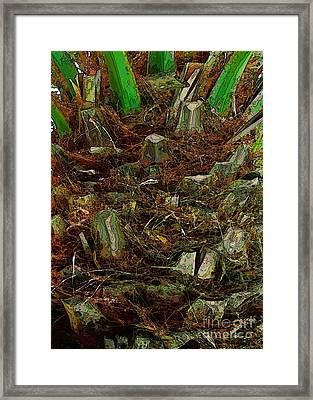 Heart Of Palm Framed Print