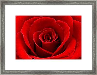 Heart Rose Framed Print by Dawn Black