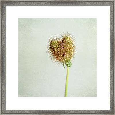 Heart Shaped Seed Pod Framed Print by Pamela N. Martin