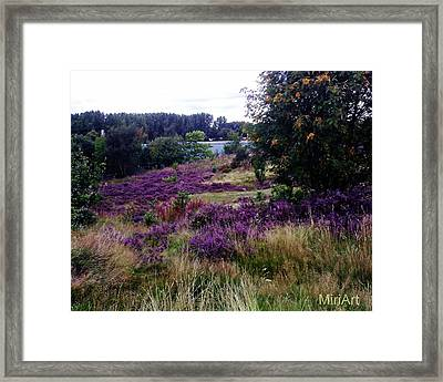 Heathers On The Moor 2011 Framed Print