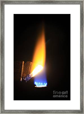Heating Lime Limelight Framed Print by Ted Kinsman