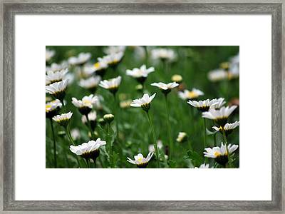 Framed Print featuring the photograph Heavenly Daisies by Amee Cave