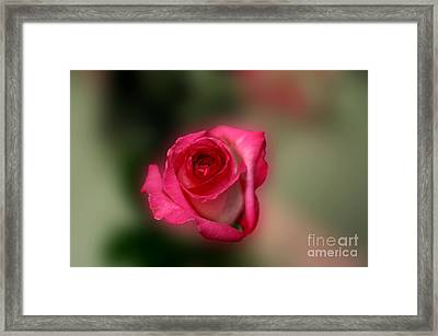 Framed Print featuring the photograph Heavenly Rose by Michael Waters