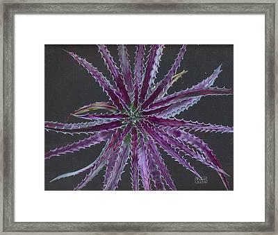 Hechtia Argentea Framed Print
