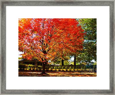Hedge Row Framed Print by Chris Berry