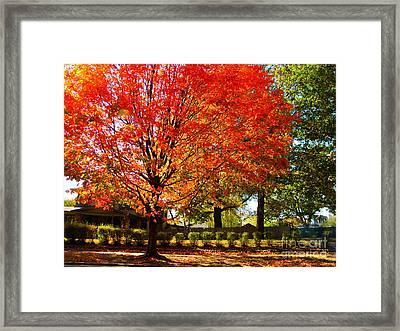 Hedge Row Framed Print