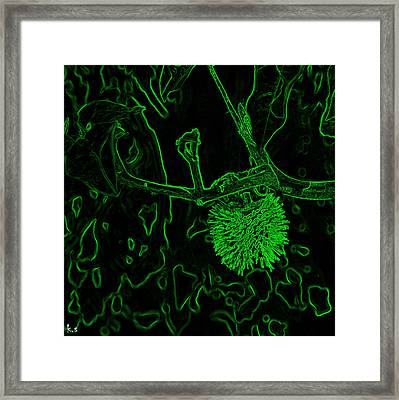 Hedgehog  Framed Print by Keren Shiker