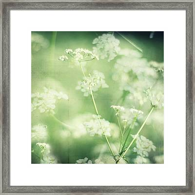 Hedgerow Blossom In Spring Framed Print by Nichola Sarah