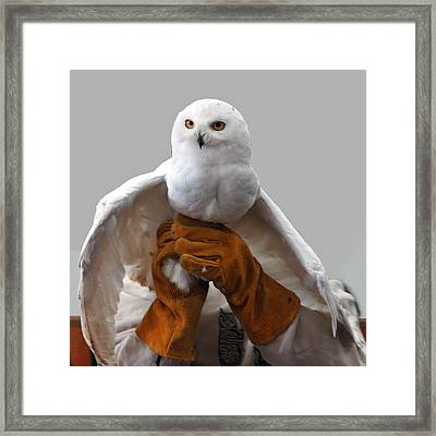 Hedwig Harry Potters Pet Framed Print by LeeAnn McLaneGoetz McLaneGoetzStudioLLCcom