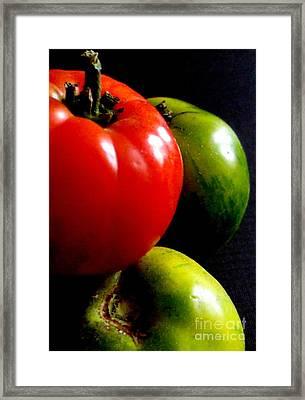 Heirloom Tomatoes Framed Print by Maria Scarfone