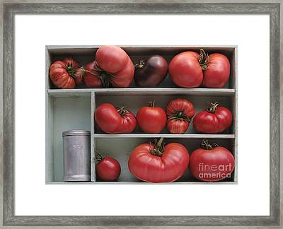 Heirloom Tomatoes With An Old Salt Shaker Framed Print by Ruby Hummersmith