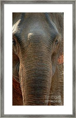 Elephant In The Room Framed Print by Bob Christopher