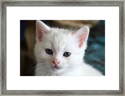 Hello  Framed Print by Courtney Dyer