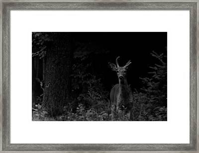 Hello Deer Framed Print by Cheryl Baxter