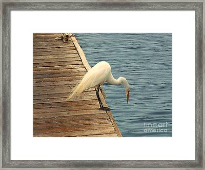 Hello Down There Framed Print by Methune Hively