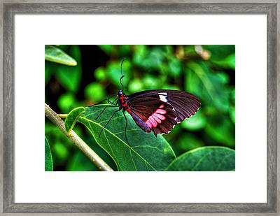 Hello Flutterby Framed Print by Randy Aveille