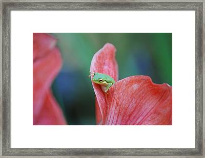 Framed Print featuring the photograph Hello by Kathy Gibbons